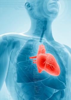 Healthy heart photo